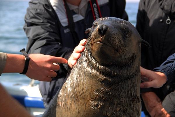 鯨灣海洋生態之旅