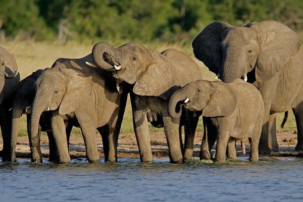 喬貝國家野生動物保護區