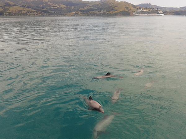 追蹤野生海豚