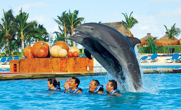 卡瑞特主題遊樂園與海豚暢泳