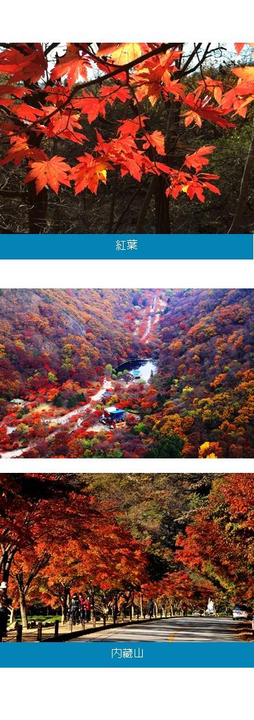 韩国八景之首,全国第一的枫叶山,树龄达五十到二百年的唐丹枫,小丹枫